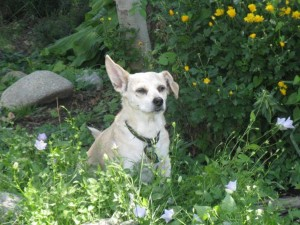 tortilla sniffing the flowers3